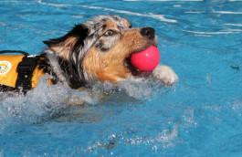 Canine Pool